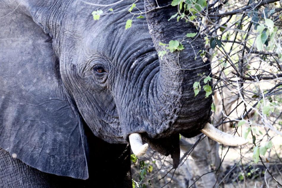 Voyage sur mesure Afrique australe
