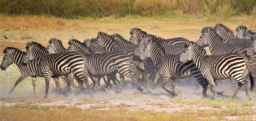 voyage afrique australe
